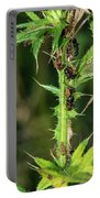 Mutualism - Ants And Treehoppers Portable Battery Charger