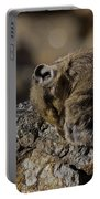 Napping American Pika - 4694 Portable Battery Charger