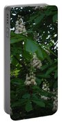 nature Ukraine blooming chestnuts Portable Battery Charger
