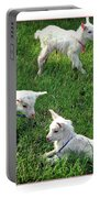 Newborn Goats Portable Battery Charger