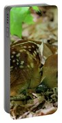 Newborn White-tailed Deer Fawn Portable Battery Charger