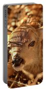 Newly Born Fawn Hiding In A Saskatchewan Field Portable Battery Charger