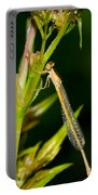 newly emerged Rambur's forktail Portable Battery Charger