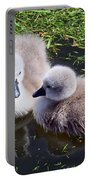 Newly Hatched Cygnets At Abbotsbury Portable Battery Charger