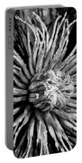 Niobe Clematis Study In Black And White Portable Battery Charger