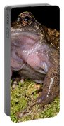 Noras Spiny Chest Frog Portable Battery Charger