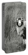 North Yorkshire Moors Sheep Portable Battery Charger
