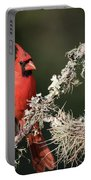 Northern Cardinal In Repose Portable Battery Charger