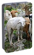 Nosy Sheep Portable Battery Charger