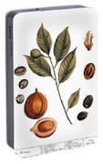 Nutmeg, 1735 Portable Battery Charger