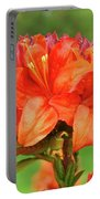 Office Art Prints Azaleas Botanical Landscape 11 Giclee Prints Baslee Troutman Portable Battery Charger