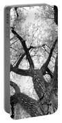 Old Cottonwood Tree Portable Battery Charger