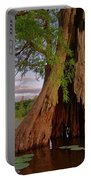 Old Cypress Trunk Portable Battery Charger