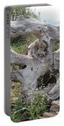 Old Stump At Gold Beach Oregon 1 Portable Battery Charger