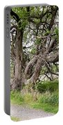 Old Weathered Tree Portable Battery Charger