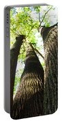 Oldgrowth Tulip Tree Portable Battery Charger