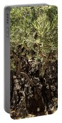 Olive Tree Portable Battery Charger