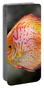 Orange Aquarium Fish In Zoo Portable Battery Charger