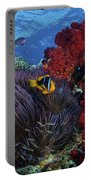 Orange-finned Clownfish And Soft Corals Portable Battery Charger by Terry Moore