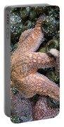 Orange Starfish Portable Battery Charger