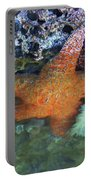 Orange Starfish Portable Battery Charger