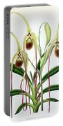 Orchid, Cypripedium Caudatum, 1880 Portable Battery Charger