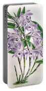 Orchid, Dendrobium Transparens, 1891 Portable Battery Charger