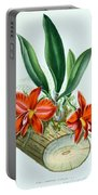 Orchid, Sophronitis Grandiflora, 1880 Portable Battery Charger