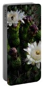 Organ Pipe Cactus Flowers  Portable Battery Charger