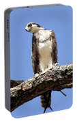 Osprey In The Trees Portable Battery Charger