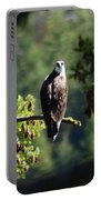 Osprey On Branch Portable Battery Charger