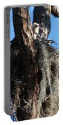 Ospreys In Spanish Moss Nest Portable Battery Charger
