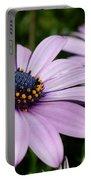 Osteospermum 'margarita Lilac' Portable Battery Charger