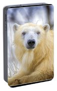Painted Polar Bear  Portable Battery Charger