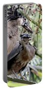 Pair Of Boat Billed Night Herons Share A Joke Portable Battery Charger