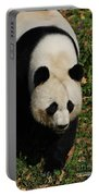Panda Bear Walking Forward In A Large Field Portable Battery Charger