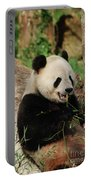 Panda Bear With Teeth Showing While He Was Eating Bamboo Portable Battery Charger