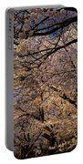 Panorama Of Forest Of Sakura Japanese Flowering Cherry Trees Wit Portable Battery Charger