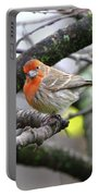 Partial-migrator House Finch Portable Battery Charger