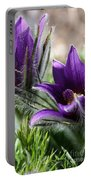 Pasque Flower Duo Portable Battery Charger