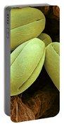 Pear Pollen Grains, Sem Portable Battery Charger