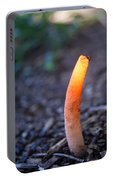 Peeping Red Eyed Fly Portable Battery Charger