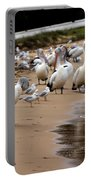 Pelicans At Pearl Beach 1.0 Portable Battery Charger