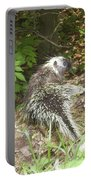 Pennsylvania Porcupine Portable Battery Charger