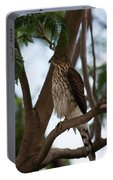 Perched Hawk Portable Battery Charger