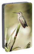 Perched Hummingbird On Flower Portable Battery Charger