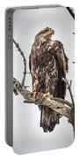 Perched Juvenile Eagle Portable Battery Charger