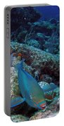 Perky Parrotfish Portable Battery Charger