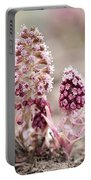 Petasites Hybridus Pink Flowers Portable Battery Charger