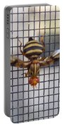 Picture Winged Bee Fly On Screen     Spring      Indiana Portable Battery Charger